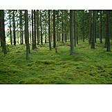 Forest, Moss, Coniferous