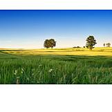 Field, Meadow, Agriculture, Rape field