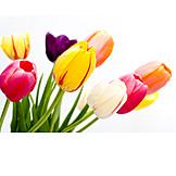 Blossom, Tulip, Bouquet