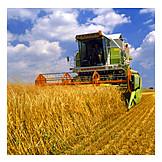 Wheat, Harvest, Combine