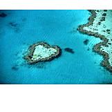 Heart, Reef