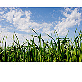 Grass