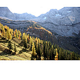 Mountain range, Autumn, Larch forest
