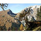 Mountain range, Larch tree