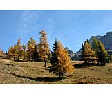 Landscape, Fall colors