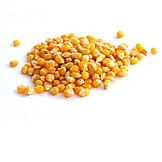 Maize, Popcorn