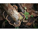 Branch, Tree Fungus, Trametes Versicolor