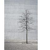 Tree, Concrete
