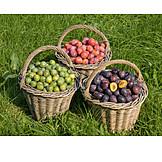 Plum, Harvest, Plum Harvest