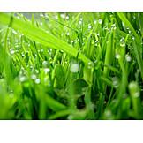 Grass, Dew, Dewdrop