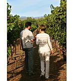 Walk, Romantic, Vineyard, Winetasting