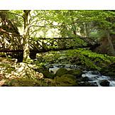 Stream, Bridge, Wutach