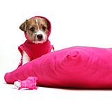 Terrier, Puppy, Dog coat