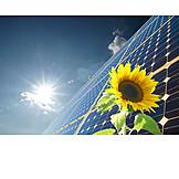 Sunflower, Climate protection, Solar, Solar energy