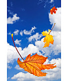 Autumn Leaves, Breezy, Maple Leaves