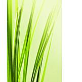 Grasses, Grass, Blade of grass