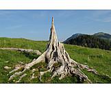 Root, Dead plant, Deadwood
