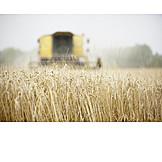 Agriculture, Harvest, Corn field, Wheat harvest