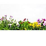 Spring, Flowering, Floristry
