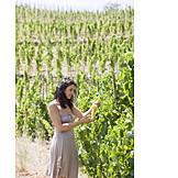 Harvest, Winemaking, Vineyard, Harvest Time, Winery, Vineyard