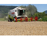 Agriculture, Harvest, Combine, Grain harvest