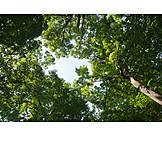 Tree, Treetop, Tree canopy