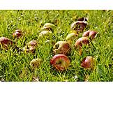 Grass, Apple, Fruit