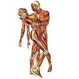 Anatomy, Muscle, 3d Rendering, Medical Illustrations