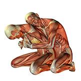 Anatomie, Muskelaufbau, 3d-rendering, Medizinische Grafik
