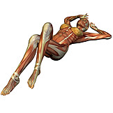 Anatomy, Muscle, Medical Illustrations