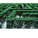 Hiding, Labyrinth, Boxwood hedge