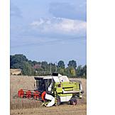 Harvest, Combine, Grain Harvest