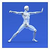 Medical Illustrations, Glass Man, Human Body