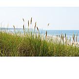 Coast, Marram grass, Baltic sea coast