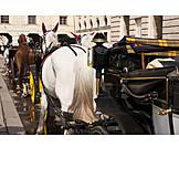 Vienna, Horse Carriage, Fiaker