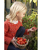 Girl, Pick, Tomato harvest