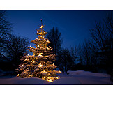 Christmas, Christmas Tree, Christmas