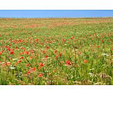 Spring, Flower Meadow
