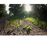 Sunlight, Path, Gravel road