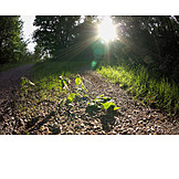 Sunlight, Path, Gravel road