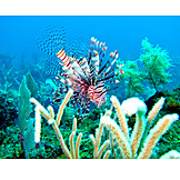 Coral reef, Fish, Lionfish