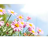 Flower meadow, Gerbera