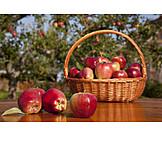 Apple, Harvest, Apple Harvest