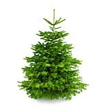 Tree, Coniferous Tree, Christmas Tree, Christmas Tree