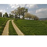Footpath, Spring