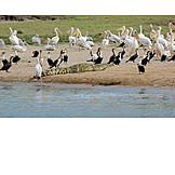 Group Of Animals, Wildlife, Waterhole
