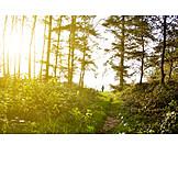 Sunshine, Path, Trail