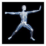 Skeleton, Sports Medicine, Medical Illustrations