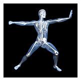 Skeleton, Sports Medicine, Medical Illustrations