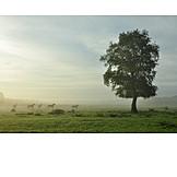 Paddock, Horse care, Herd